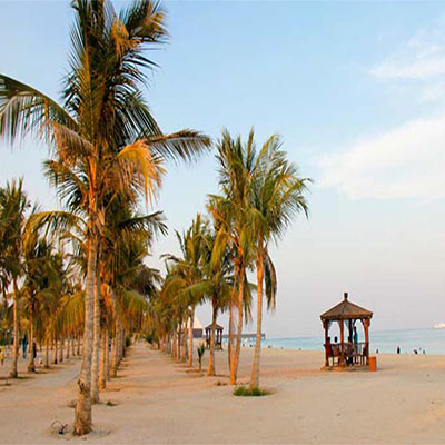 Row of palm trees with blue sky on the beach of Kish Island